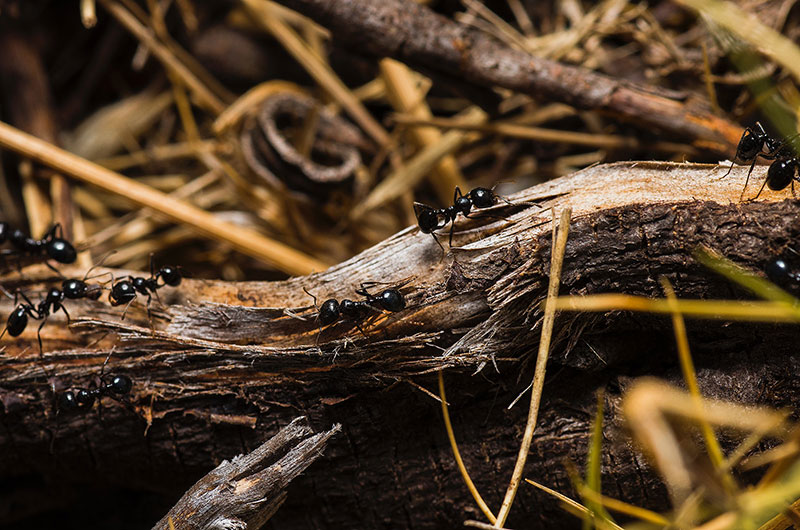 Common Fall-Time Minnesota Pests: What To Look For & How To Deal With Them