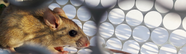 Mice control for empty winter homes